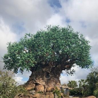 Tree of LIfe @ Disney's Animal Kingdom