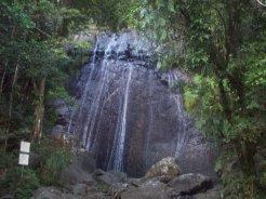 El Yunque2